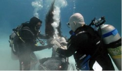 Underwater photo of two male divers assisting woman in wheelchair with goggles